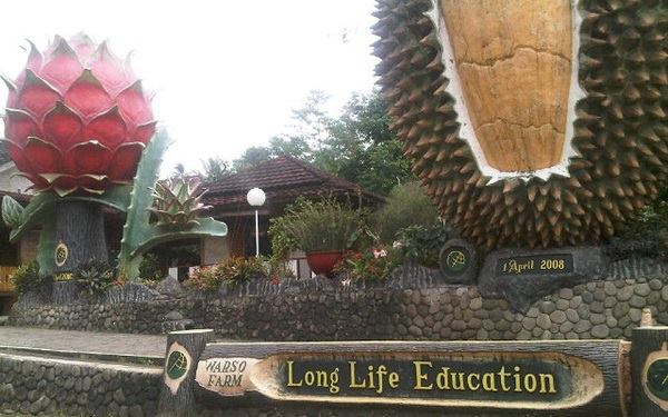 lokasi warso farm durian bogor