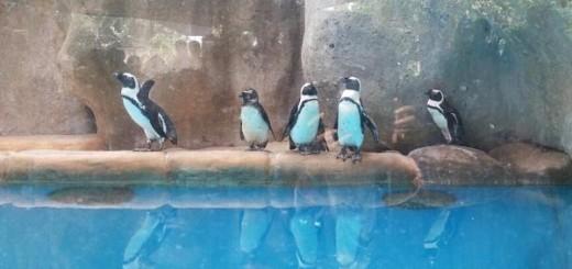 alamat kebun binatang gembira loka