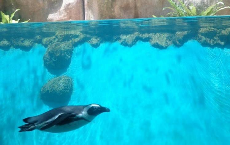 harga tiket masuk kebun binatang gembira loka zoo