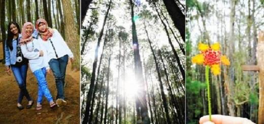 lokasi hutan pinus imogiri bantul yogyakarta