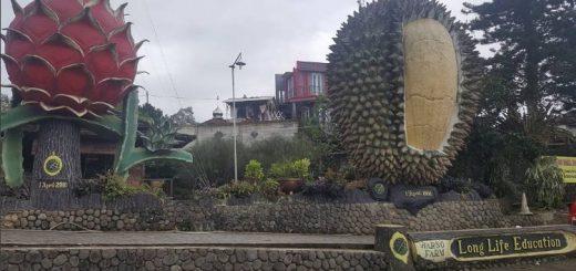 warso farm durian bogor